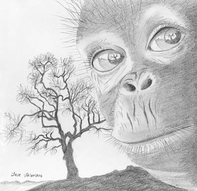 Chimpanzee Drawing - Lost Home by M Valeriano