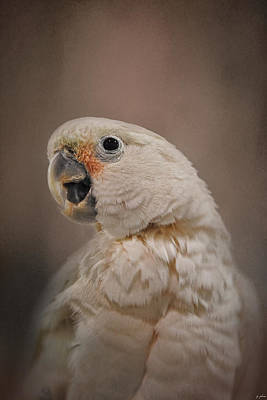 Cockatoo Photograph - Lots To Say by Jai Johnson