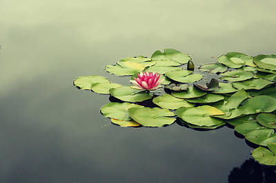 Mystical Women Mixed Media - Lotus Flower by Barbara Ki