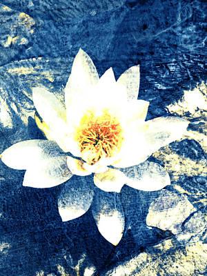 Lotus On Blue Print by Ann Powell