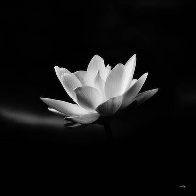 Lotus Print by Scott Pellegrin