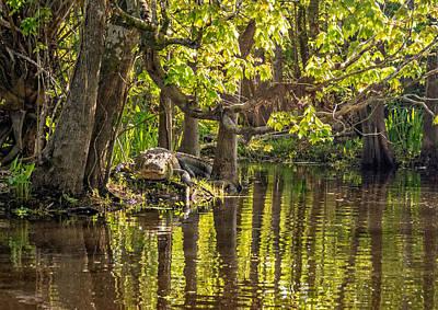 Alligator Bayou Photograph - Louisiana Bayou by Steve Harrington