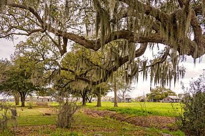 Road Photograph - Louisiana Idyll by Steve Harrington