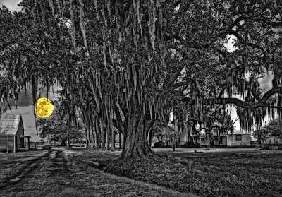 Louisiana Moon Rising Monochrome 2 Print by Steve Harrington