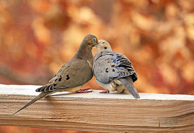 Dove Photograph - Love Birds by Donna Kennedy
