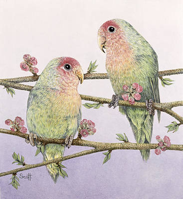 Breed Study Painting - Love Birds by Pat Scott