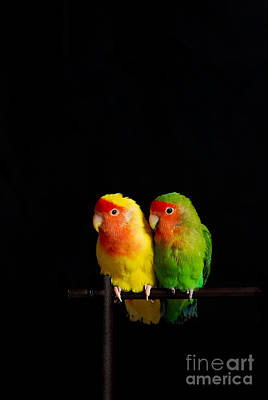 Fine Art Choices Photograph - Love Birds by Syed Aqueel