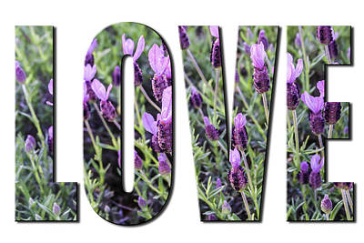 Photograph - Love In Spanish Lavender On White From The Faith Hope And Love Series by Karen Stephenson