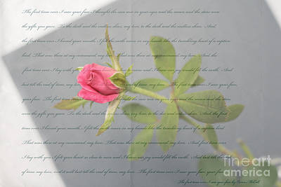 Love Letter Lyrics And Rose Print by Ella Kaye Dickey