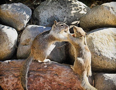Squirrel Photograph - Love Means Never Having To Say Your Sorry by Donna Kennedy