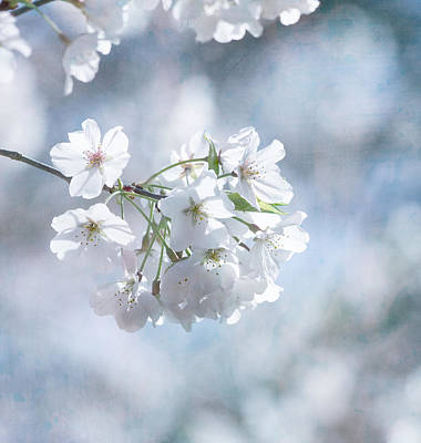Garden Flowers Photograph - Love Must Be by Kim Hojnacki