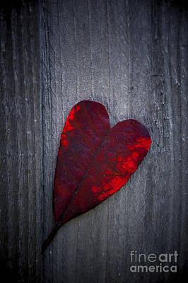 Love Print by Svetlana Sewell