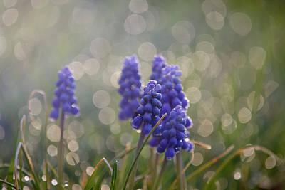 Purple Grapes Mixed Media - Love To Boston by Trish Tritz