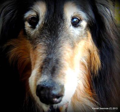 Senior Dog Photograph - Loved by Rabiah Seminole