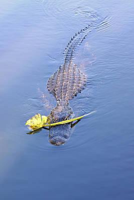 Lover Boy Alligator  Print by Rudy Umans