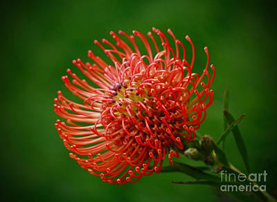 Loving The Color Orange Print by Inspired Nature Photography Fine Art Photography