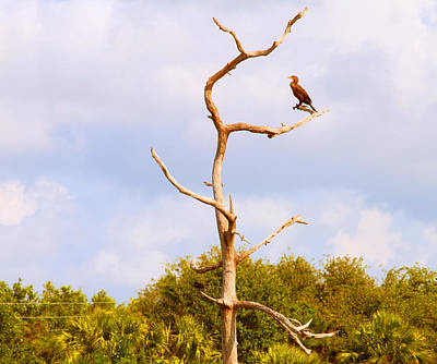 Cormorant Photograph - Low Angle View Of A Cormorant by Panoramic Images