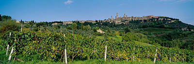 Hilltop Scenes Photograph - Low Angle View Of A Vineyard, San by Panoramic Images