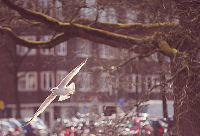 Low Flight. Pink Spring In Amsterdam Print by Jenny Rainbow