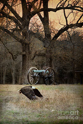 History Of Tennessee Photograph - Low Flyer - Bald Eagle by Jai Johnson