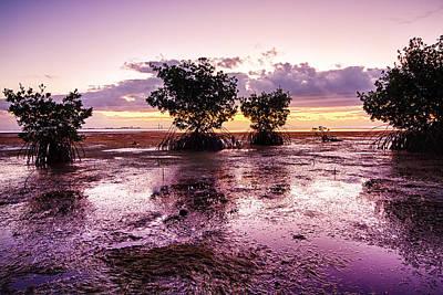 Low Tide Mangrove Print by Joe Myeress