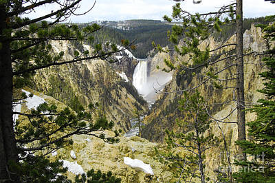 Lower Falls From Artist Point Yellowstone National Park Print by Shawn O'Brien