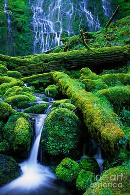 Basalt Photograph - Lower Proxy Falls by Inge Johnsson