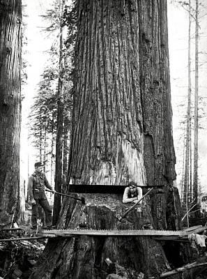 Lumberjacks At Work C. 1887 Print by Daniel Hagerman