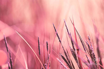 Aimelle Photograph - Luminis - S09c - Pink by Variance Collections