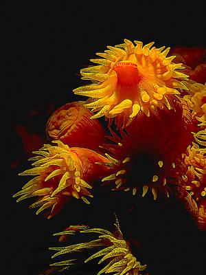 Manipulation Photograph - Luminous Anemones by Bill Caldwell -        ABeautifulSky Photography