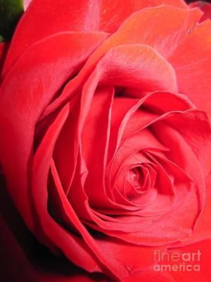 Luminous Drawing - Luminous Red Rose 10 by Tara  Shalton