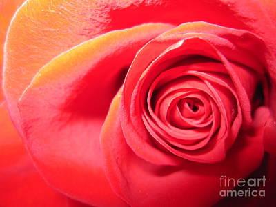 Luminous Drawing - Luminous Red Rose 1 by Tara  Shalton