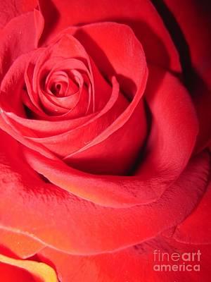 Luminous Drawing - Luminous Red Rose 6 by Tara  Shalton
