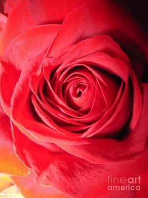 Luminous Drawing - Luminous Red Rose 7 by Tara  Shalton