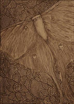 Luna Moth Drawing - Luna Moth by Emily Lowe