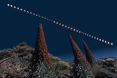 Lunar Eclipse And Tenerife Bugloss Plants Print by Juan Carlos Casado (starryearth.com)