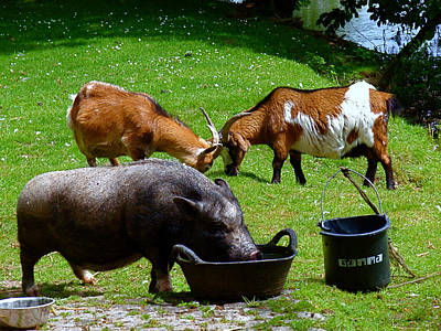 Animals Photograph - Lunchtime by Rona Black