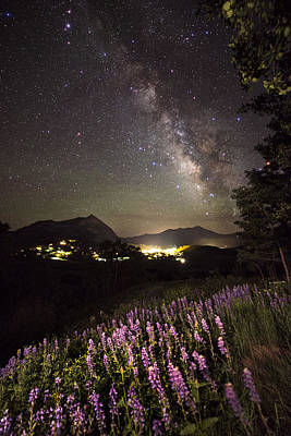 Lupine Blanket Under The Stars Print by Mike Berenson