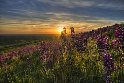Lupine Sunset Print by Mark Kiver