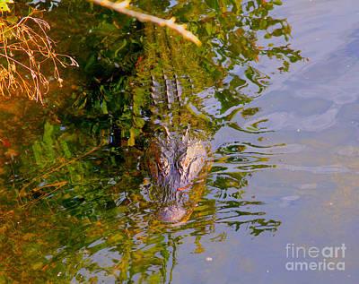 Alligator Bayou Photograph - Lurking by Carey Chen