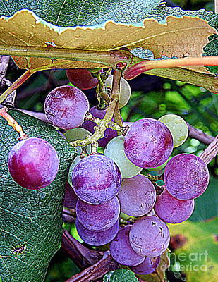 Luscious Grapes In New Orleans Louisiana Print by Michael Hoard