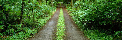 Lush Foliage Lining A Wet Driveway Print by Panoramic Images