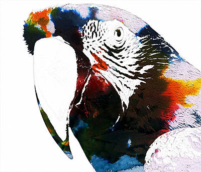 Macaw Mixed Media - Macaw In Watercolor by Celestial Images