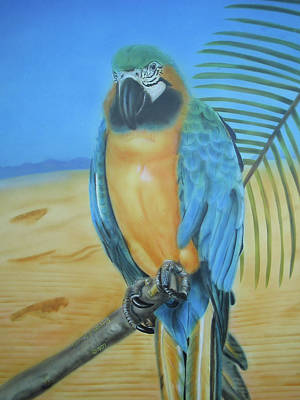 Macaw Painting - Macaw On A Limb by Thomas J Herring