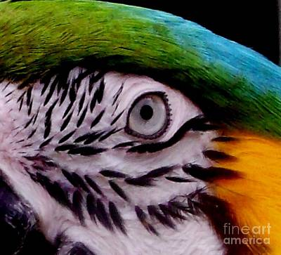 Macaw Parrot Eyes You Print by Gail Matthews