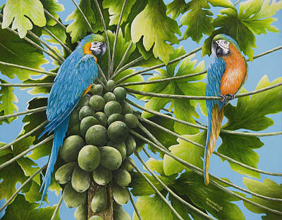 Blue And Gold Macaw Painting - Macaw Parrots In Papaya Tree by Mary Ann King