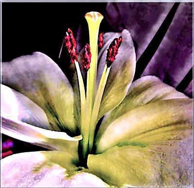 Macro Luminous Lily  Print by Danielle  Parent