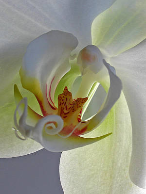 Macro Photograph Of An Orchid  Print by Juergen Roth