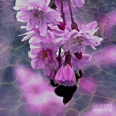 Macro Pink Flowers With Bee Print by Maggie Vlazny