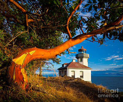 Madrone And Lighthouse Print by Inge Johnsson